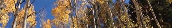 Fall Bottom Banner