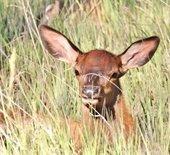 Elk open